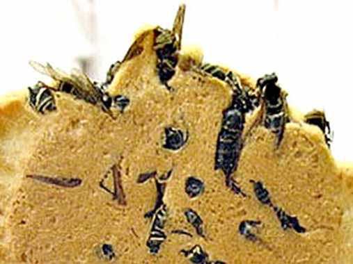 Wasp Crackers | 14 productos culinarios que los gallegos no se comerían en los restaurantes en Galicia